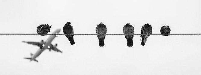 birds-1746455__340